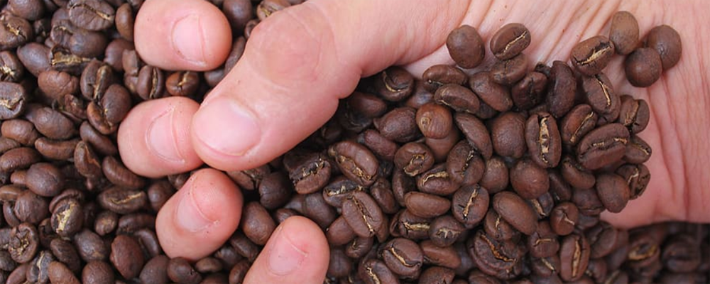 Medium roasts coffee beans