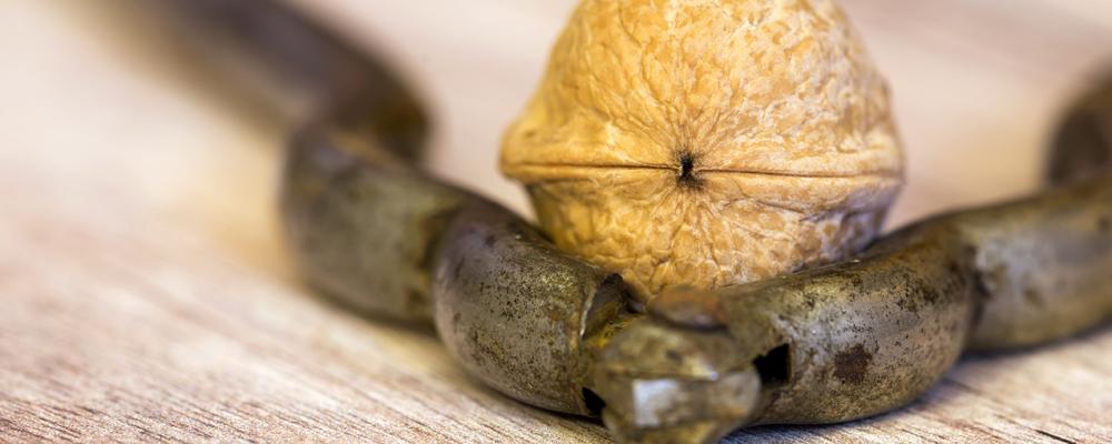Nut with an old nutcracker