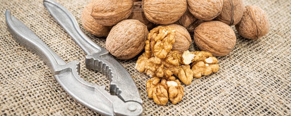 Walnut kernel background. Nutcracker with walnut